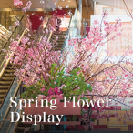 Spring Flower Display
