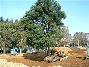 既存樹木の移植